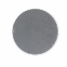 Matrita Silicon Pentru Stampila Unghii Alba A3